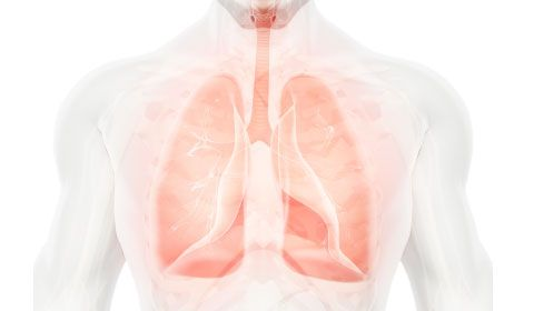 Medical Diagram of chest, lungs and air way